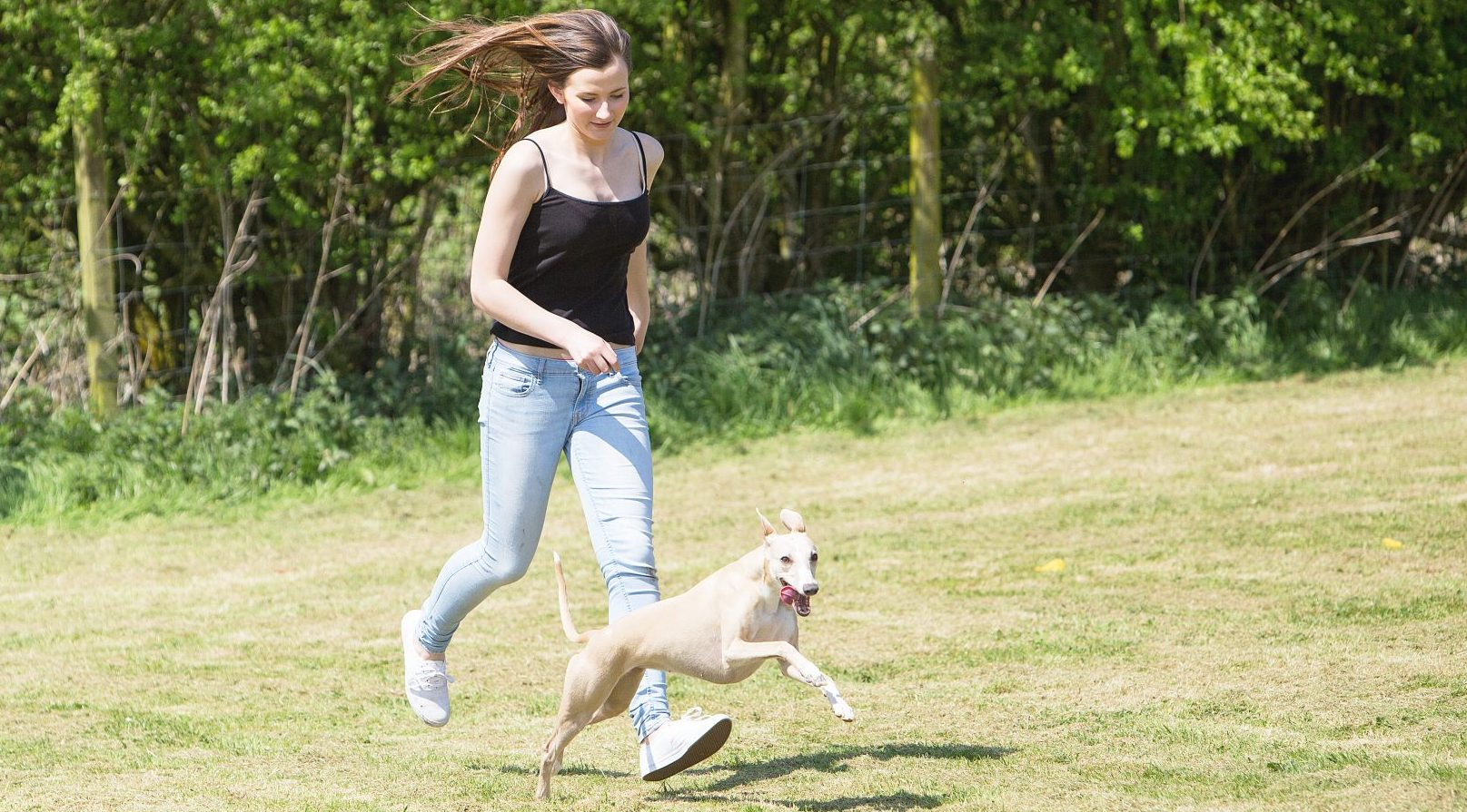 What does a Dog Handler do? | First Careers